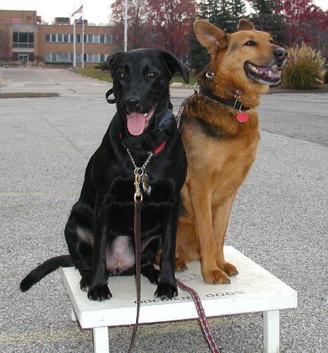Back to Basics Dog Training | Training Programs | 5 Day Drop